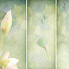 Lotus Garden by Margi
