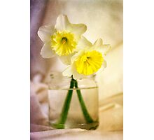 Two Daffodils Photographic Print