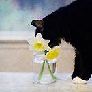 Spring is here by Lynn Starner