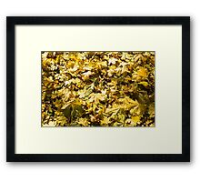 Top view on the yellow maple leaves on the lawn Framed Print
