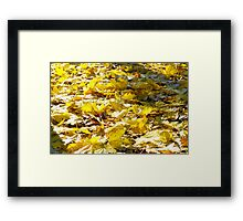 Selective focus on the yellow fallen autumn maple leaves closeup Framed Print