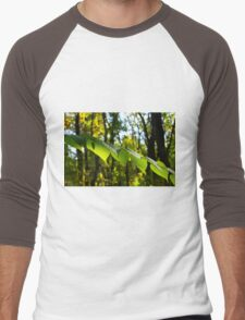 Selective focus on the branch of a tree with large green leaves Men's Baseball ¾ T-Shirt