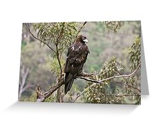 Wedge-tailed Eagle  Greeting Card
