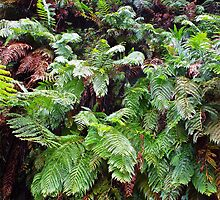 Fern  by Anthony  Hoiland