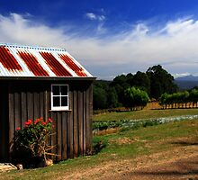 Pickers Hut - Hartzview Vineyards, Tasmania by clickedbynic