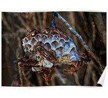 Native Paper Wasps Poster
