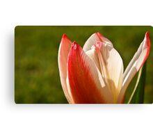 Tulip Split Canvas Print