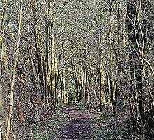 Woodland walk  by larry flewers