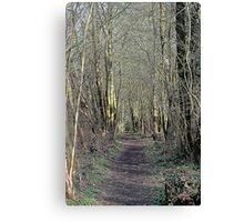 Woodland walk  Canvas Print