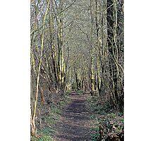 Woodland walk  Photographic Print