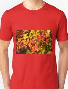Background of bright red and yellow maple leaves T-Shirt