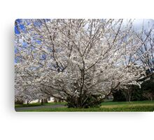 SPRING IN FULL BLOOM!! Canvas Print