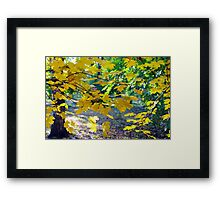 Maple branches with yellow leaves in the foreground Framed Print