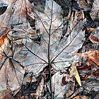 Wet Leaves, Dunrobin Ontario by Debbie Pinard