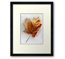 Orange Maple Leaf Framed Print