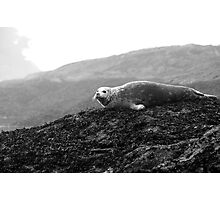 I wonder what i can see from up here? Photographic Print