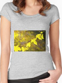 Little branch of maple with yellow leaves close up Women's Fitted Scoop T-Shirt