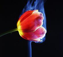 Flower in smoke. by Ilze Romanovska