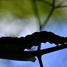 Caterpillar Crossing by Helen J Cherry