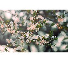 tree flowers Photographic Print