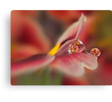 Red primrose refraction Canvas Print
