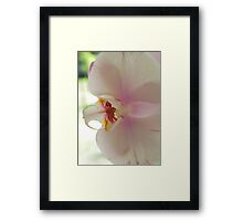 Blushing Bloom Framed Print