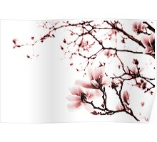 Magnolia - monochrome Poster