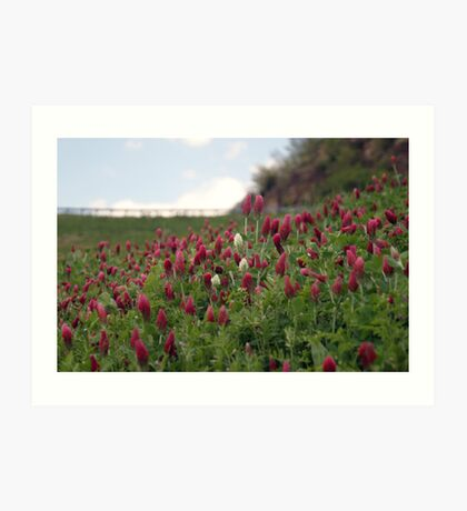 Clover At Eufaula Dam (Oklahoma) Art Print