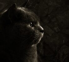 Feline perfection by Laura Melis
