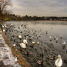 Winter Wildfowl by Tom Gomez