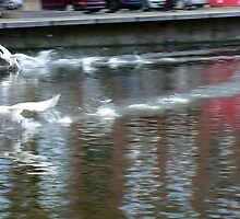 skimming swans track by LisaBeth