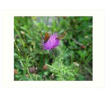SKIPPERS IN THISTLE Art Print