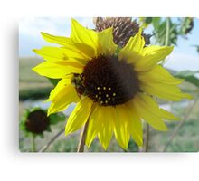 Sunflower and Red-butted Bee Metal Print