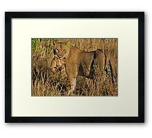 Moving to safety Framed Print
