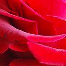 Inner Soul, A Dozen Roses, February 2012 by ArleneMartine