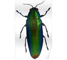 Jewel beetle Poster