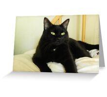 Zoe Black Cat 5 with White Oath Medallion Greeting Card