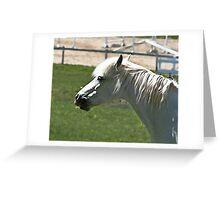 geriatric equine Greeting Card
