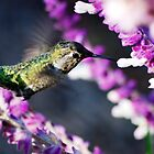 Hummingbird from last fall by loiteke