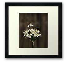 Garlic Chives Framed Print