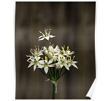 Garlic Chives Poster