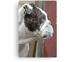 canine  Metal Print