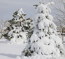 Prettiest snow of the year by Zerella