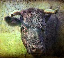 I'm not full of bull, honest! by vigor