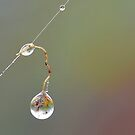 Hanging Droplet by relayer51