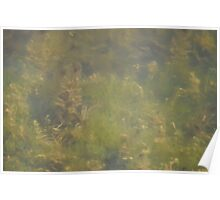 Lake Water Poster