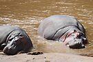 Lazy Hippos by Carole-Anne
