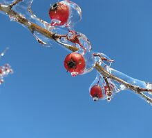 Ice Berrys by Ron Russell
