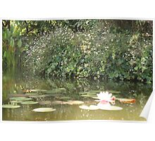 With apologies to Monet, Waterlillies and a pond Poster