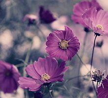 A Garden of Purple by yolanda